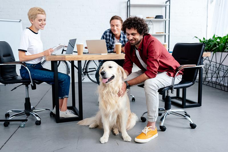 Nhiều công ty ở nước ngoài còn cho phép nhân viên đem thú cưng đến nơi làm việc.